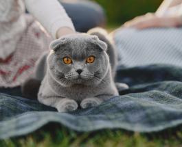 Наполнитель для кошачьего туалета своими руками: топ-4 рецепта