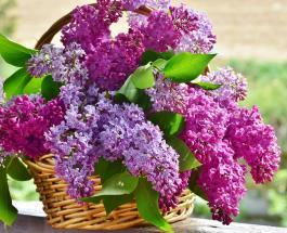 Праздник Весны и Труда: открытки и поздравления с 1 мая