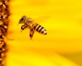 """""""Пчелы-убийцы"""": мужчина из Техаса погиб в результате нападения насекомых"""