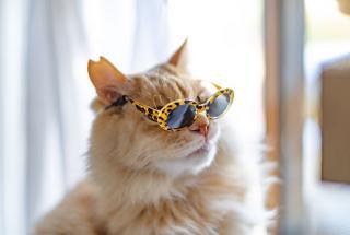 Коты в очках: забавные фото питомцев поднимающие настроение пользователям сети