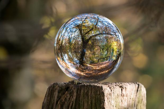 на срубе дерева прозрачный шар, у котором отражаются деревья