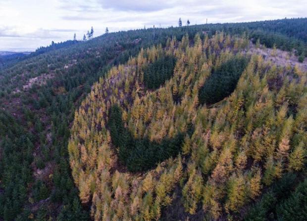 смайлик из деревьев
