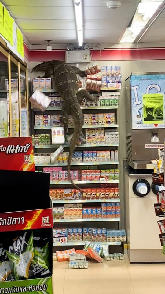 варан на полках в супермаркете
