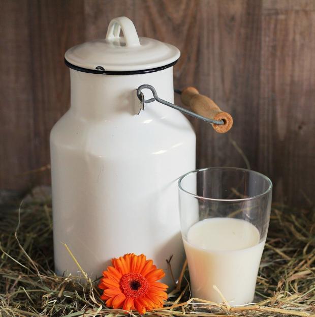 стоят белый бидон и стакан молока рядом с герберой
