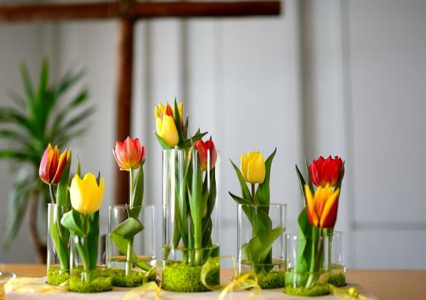 тюльпаны стоят в стеклянных высоких стаканах