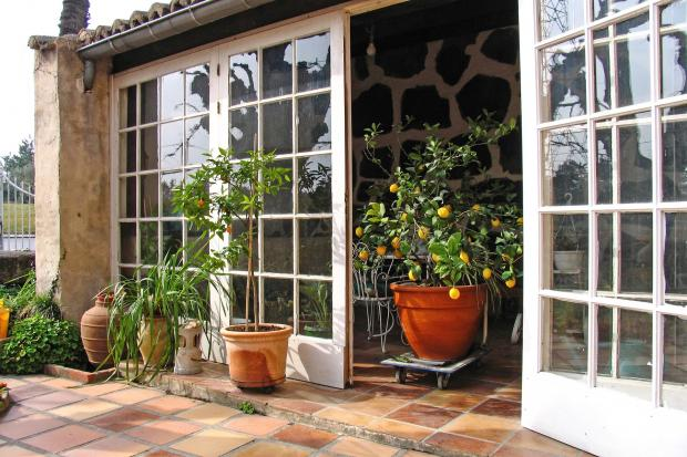 открытая веранда, лимонное дерево в горшке