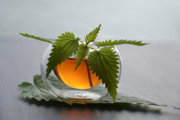 крапива стоит в прозрачной чашке с чаем