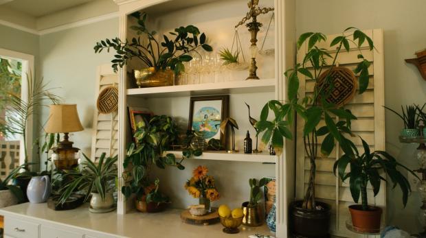 домашний интерьер с комнатными цветами