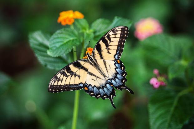 бабочка сидит на цветах