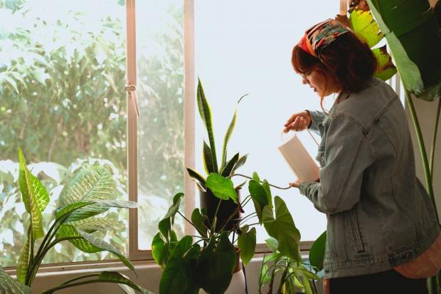 женщина поливает цветы на окне