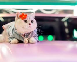 Фото востребованной модели-кошки зарплате которой может позавидовать любой человек