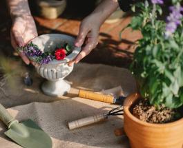 Пора пересаживать комнатное растение: 6 явных признаков
