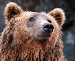 Кандидат в губернаторы Калифорнии привел с собой на митинг 500-килограммового медведя: видео
