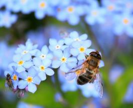 Ученые из Нидерландов обучают пчел находить по запаху коронавирус с помощью метода Павлова