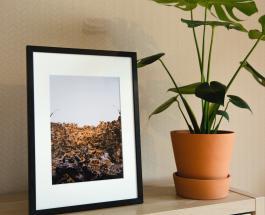 Почему глиняные горшки для растений лучше чем сосуды из пластика