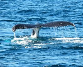 В Лондоне усыпили молодого кита, попавшего в ловушку в одном из каналов Темзы