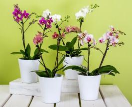 Самодельная система автополива спасет комнатные растения от засухи во время вашего отпуска