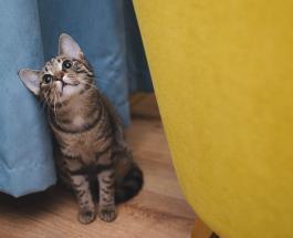 Сообразительный кот научился открывать холодильник и красть продукты: видео