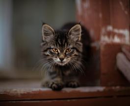 """""""Кошки на работе"""": более тысячи животных выпущены на улицы Чикаго для борьбы с крысами"""