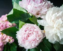 Как правильно выращивать пионы в саду: полезные советы для любителей ярких цветов