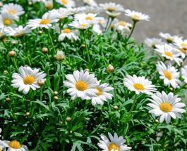 Советы начинающим садоводам-огородникам: что можно посадить в конце весны