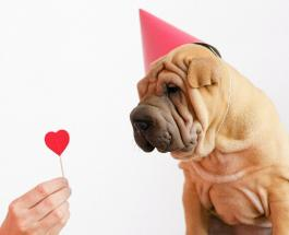 5 вещей, которые должны делать хозяева собак, чтобы продлить питомцам жизнь