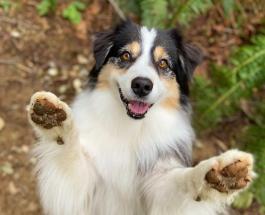 Занимается йогой и танцует: собака по кличке Секрет стала новой звездой сети