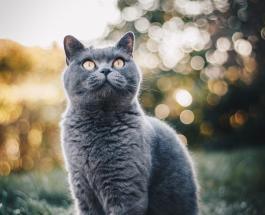 Депрессия у кошки: на какие признаки обращать внимание заботливым хозяевам