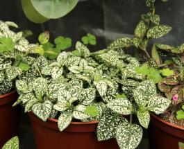 5 комнатных растений, подходящих для северных окон: им не нужно много света