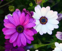 Лунный календарь комнатных растений на июнь 2021 года: в какие дни цветы лучше не трогать