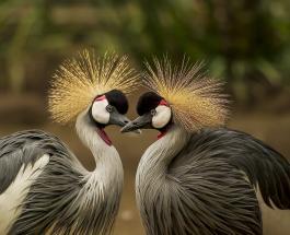 В 6 раз больше, чем людей: ученые посчитали виды диких птиц, живущих на Земле