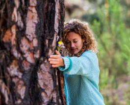 Что такое сильвотерапия и почему обниматься с деревьями полезно для души и тела