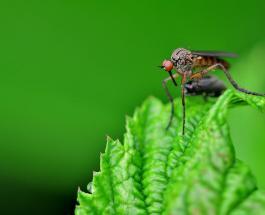 Как защититься от укусов комаров: 4 полезных совета