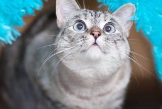 Самая популярная кошка в сети: забавные фото пушистой звезды по имени Нала