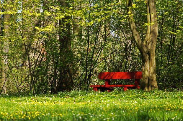 скамья в лесу