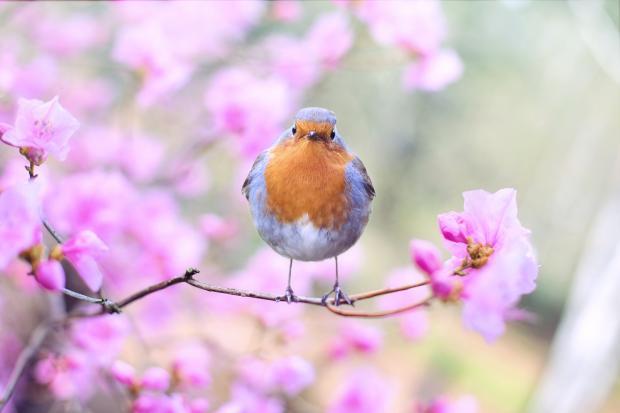птичка на цветущей ветке