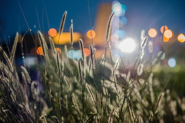растения на поле