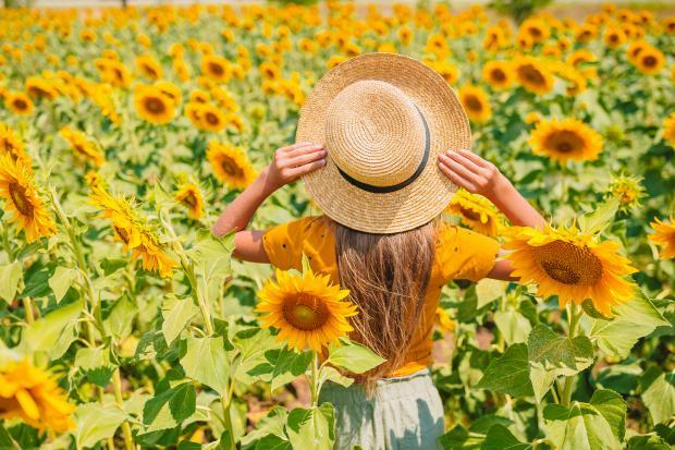 девушка в соломенной шляпе посреди поля с подсолнухами