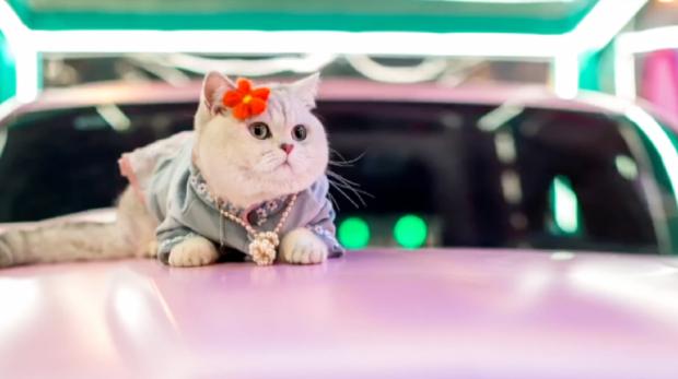 Кошка-модель