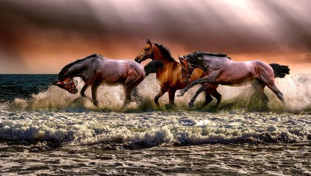 по воде мчатся три лошади