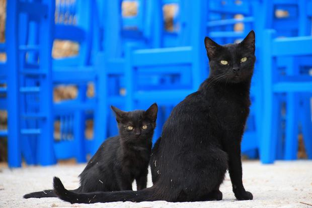 сидят черная кошка с котенком