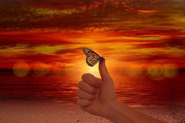 бабочка сидит на большом пальце руки на фоне красного заката