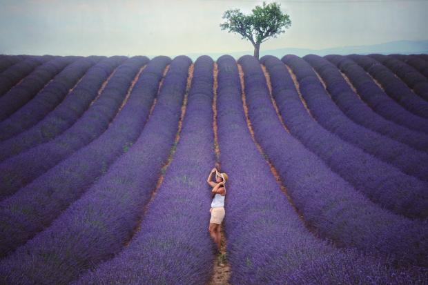 молодая девушка в лавандовом поле