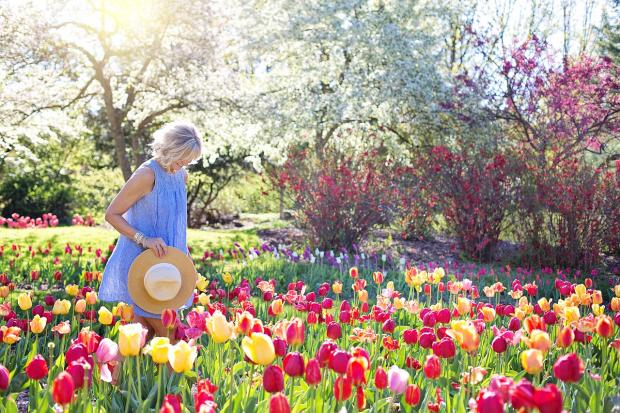 девушка в голубом сарафане идет среди цветущих тюльпанов