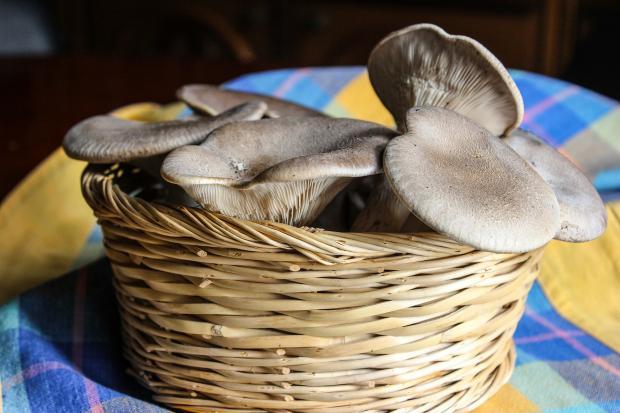 грибы в корзине