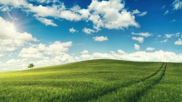 зеленое поле лежит под голубым небом