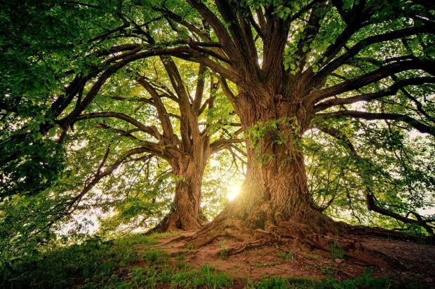 солнце просвечивает через ветви деревьев