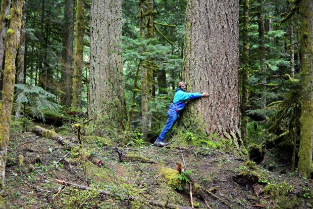мужчина обнимает дерево
