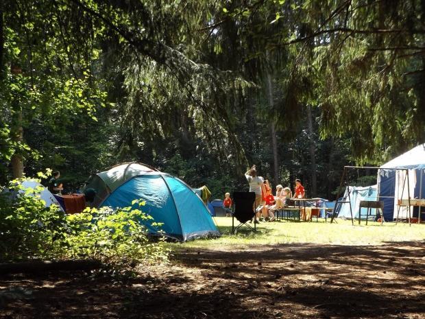 на опушке леса установлены палатки для кемпинга