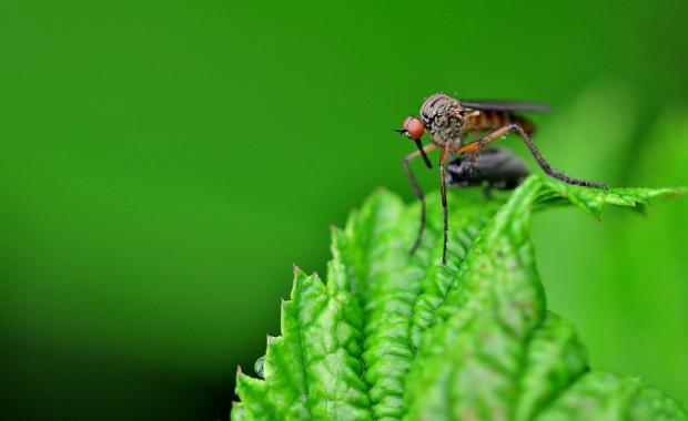 комар сидит на зеленом листе дерева